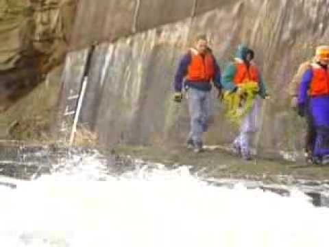 Daring Rescue: Dogs Saved From Ledge Near Rushing Water