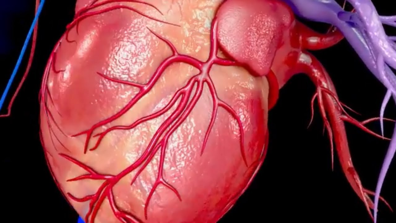 #TomorrowsDiscoveries: Heart Attack in a Dish – Dr. Brian O'Rourke - YouTube