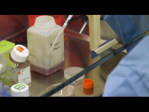 #TomorrowsDiscoveries: The Importance of Platelets - Kelly Metcalf Pate, D.V.M., Ph.D. - YouTube