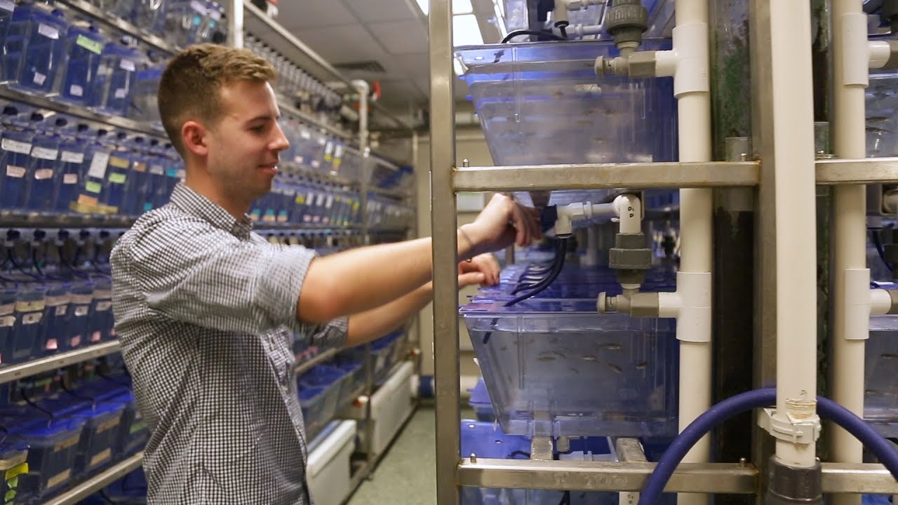 Zebrafish Research | Behind the Scenes of the Johns Hopkins Zebrafish Facility - YouTube