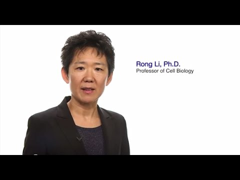 #TomorrowsDiscoveries: From Dysfunctional Cells to Disease – Dr. Rong Li - YouTube