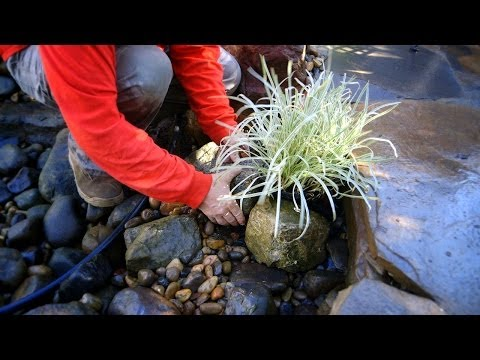 Pond Care | Spring Pond Maintenance 4 of 5