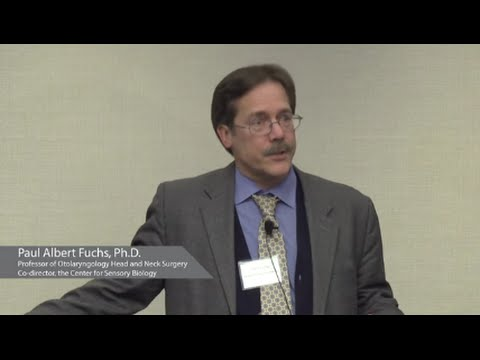 Hearing and Signaling | Paul Fuchs, Ph.D - YouTube