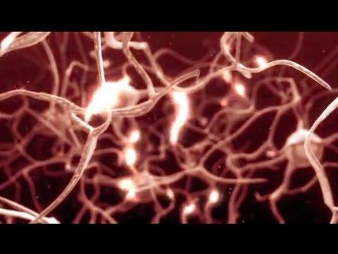 #TomorrowsDiscoveries: Preventing Neuropathy – Pathologist Joseph Mankowski - YouTube